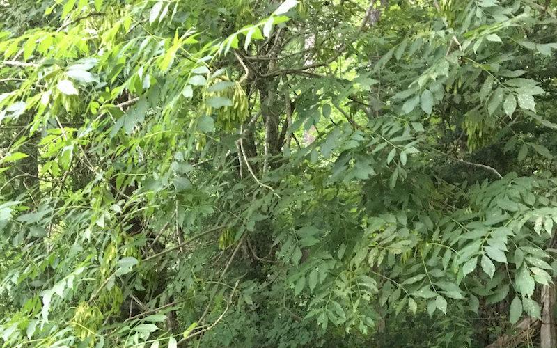 Bosques camino de Zubiri