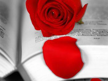 Roses i llibres per Sant Jordi