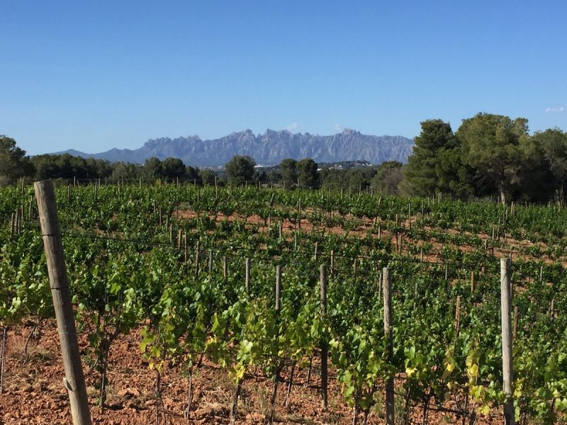 Wine in Catalonia